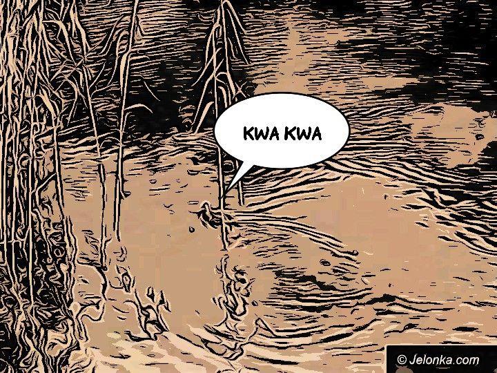 Jelenia Góra: Poniedziałek - zdjęcie 6