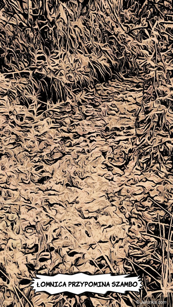 Jelenia Góra: Piątek - zdjęcie 2