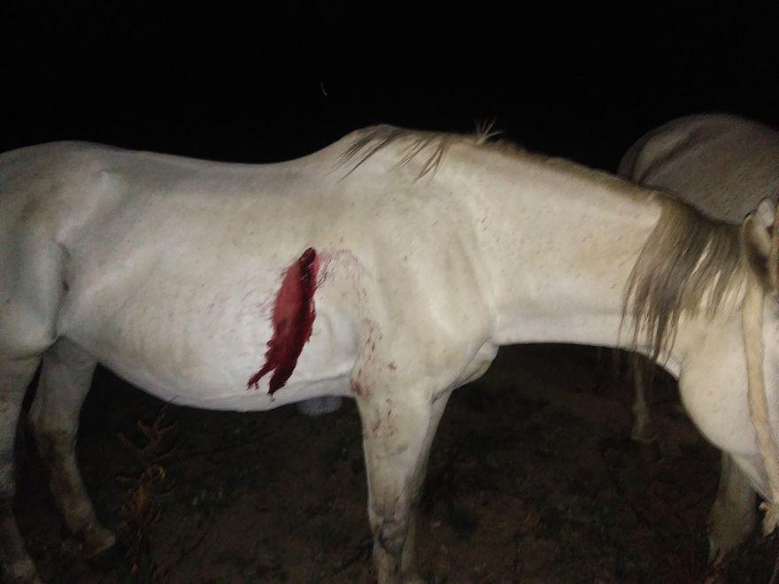Miłków: Kto strzelał do konia?
