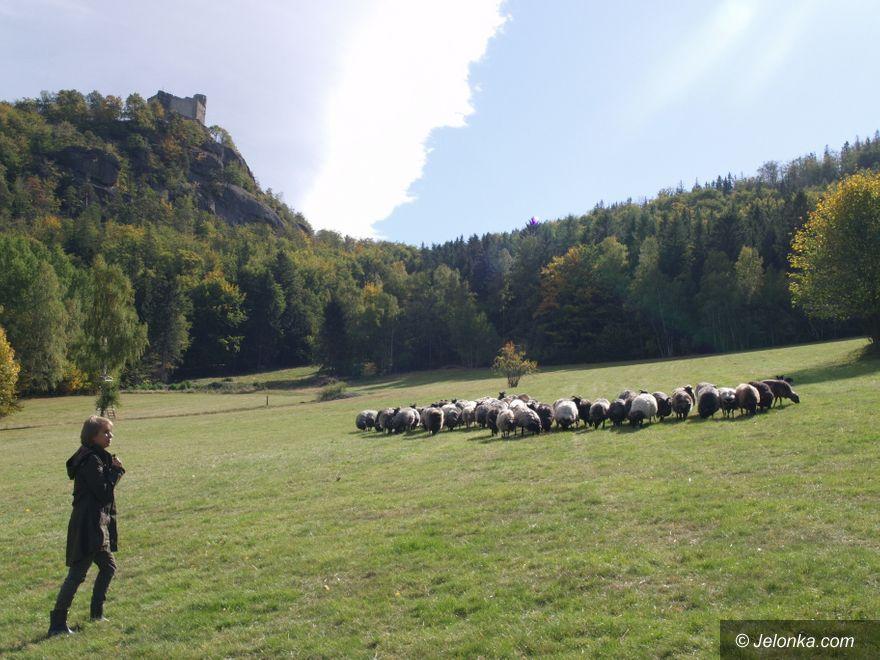 Jelenia Góra: Żywe kosiarki sprawdzają się