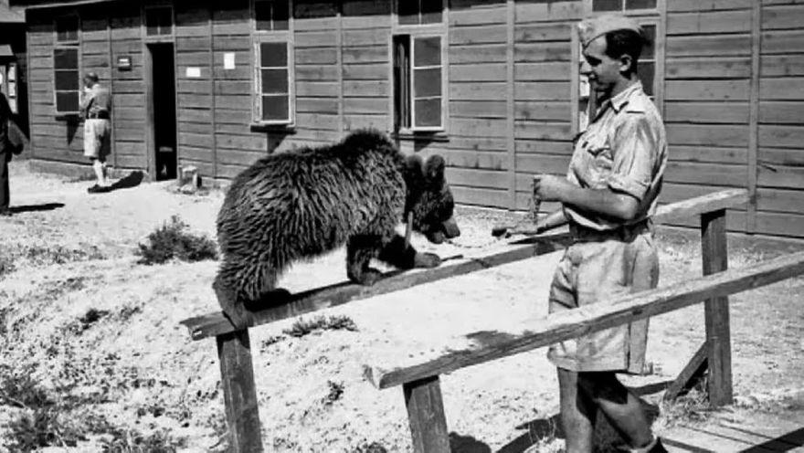 Jelenia Góra: Cieplickie tropy niedźwiedzia Wojtka