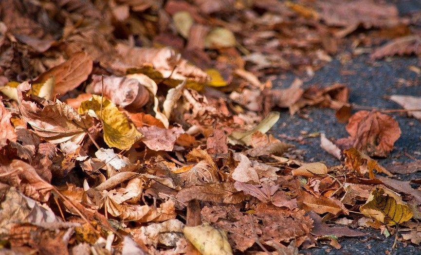 Jelenia Góra: Obowiązek sprzątania liści