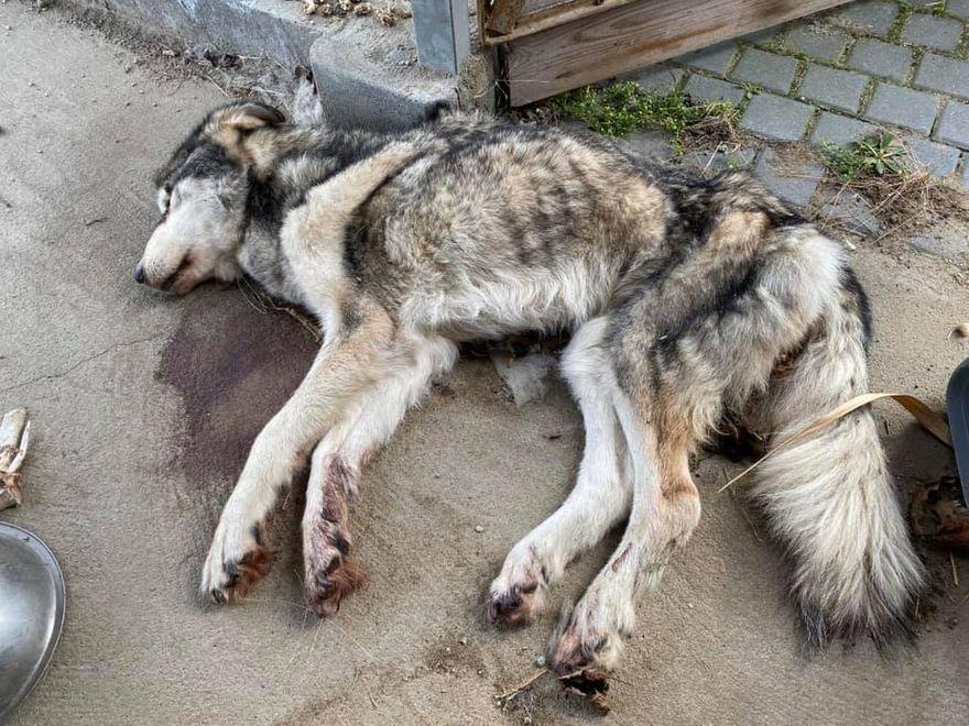 Region: Zagłodziła psa