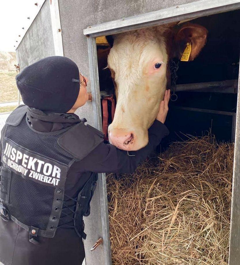 Region: Azyl dla zwierząt