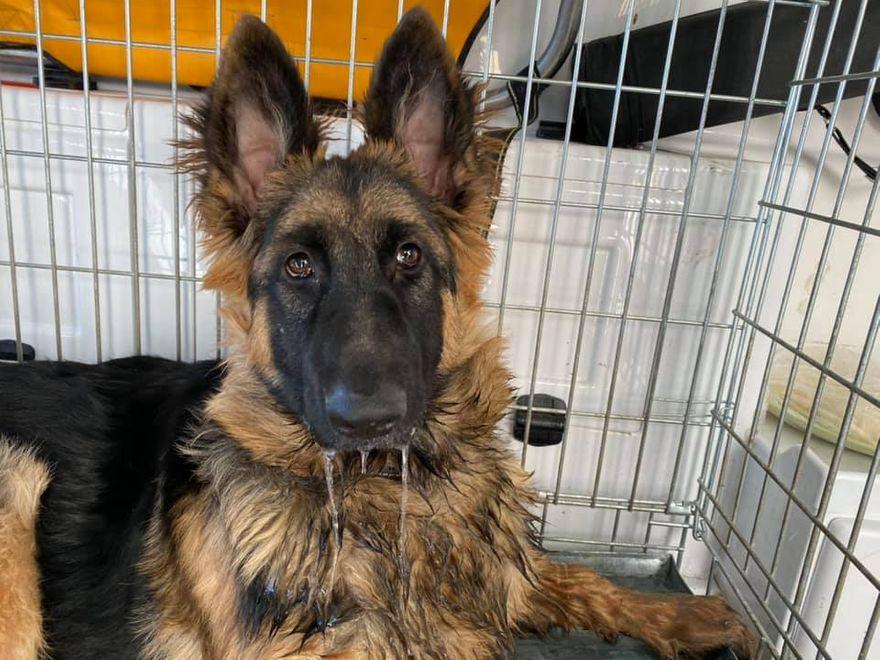 Kowary: Zaniedbany i chory pies wreszcie ma dobrą opiekę