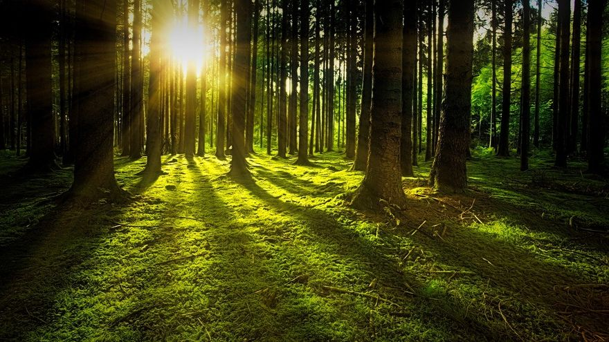 Polska: Lasy Państwowe również z zakazem