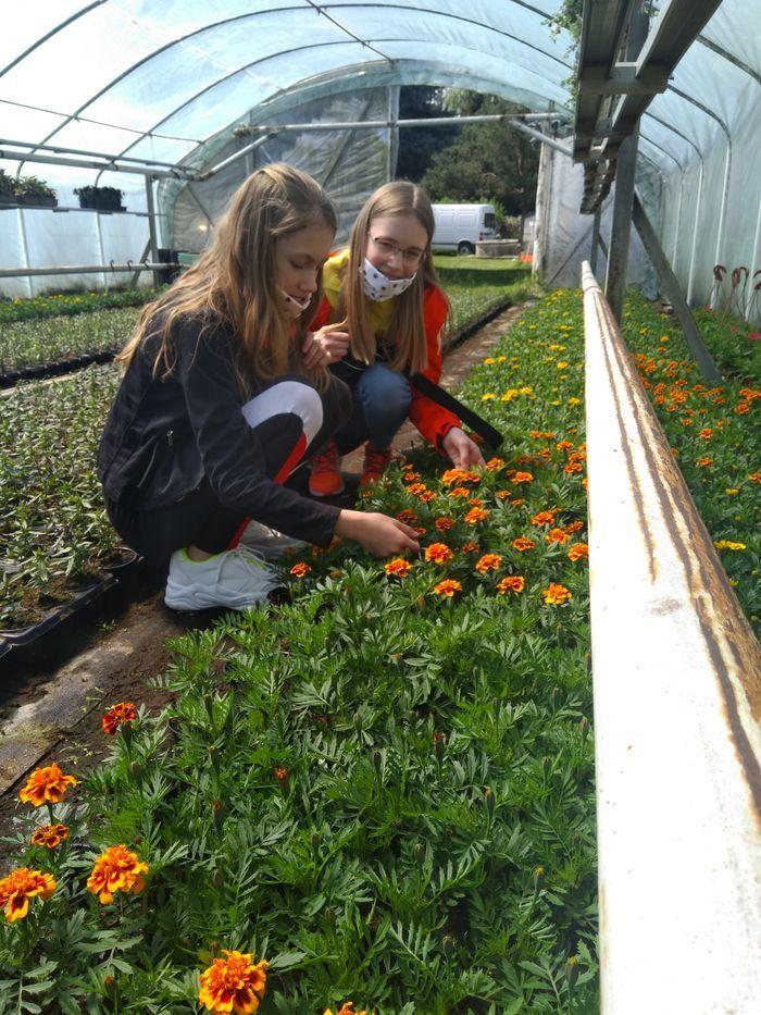 Jelenia Góra: Kwiaty dla pszczół