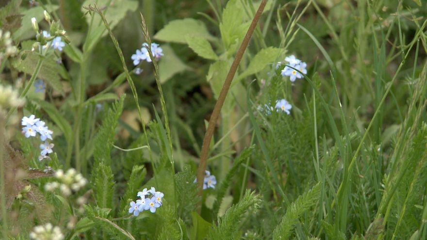 Jelenia Góra: Więcej kwietnych łąk w Jeleniej Górze