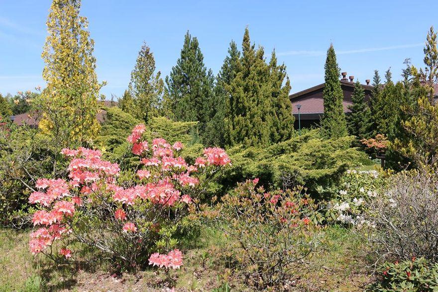 Miłków: Arboretum zaprasza