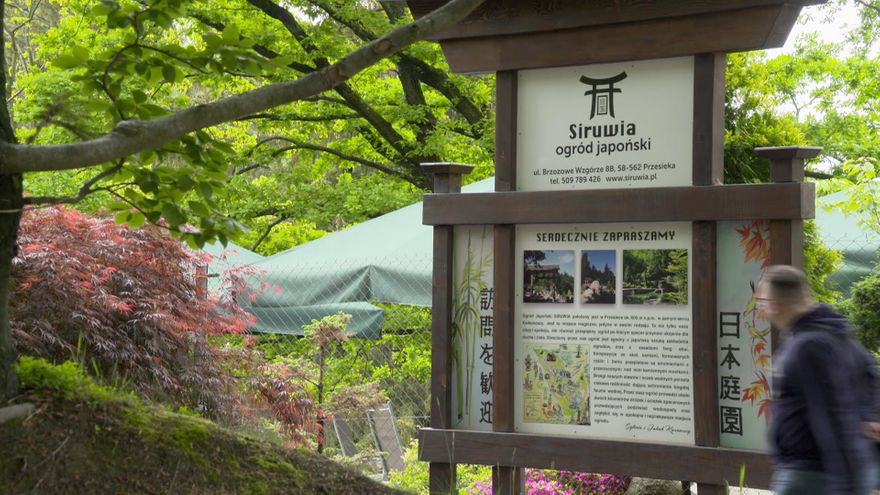 Jelenia Góra: Festiwal z azaliami i rododendronami w tle