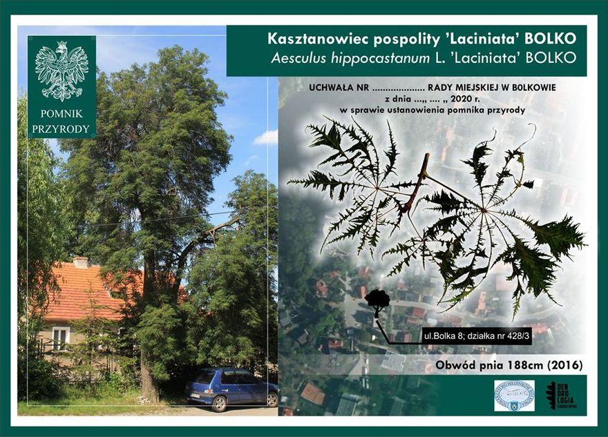 Bolków: Jest pomnik przyrody