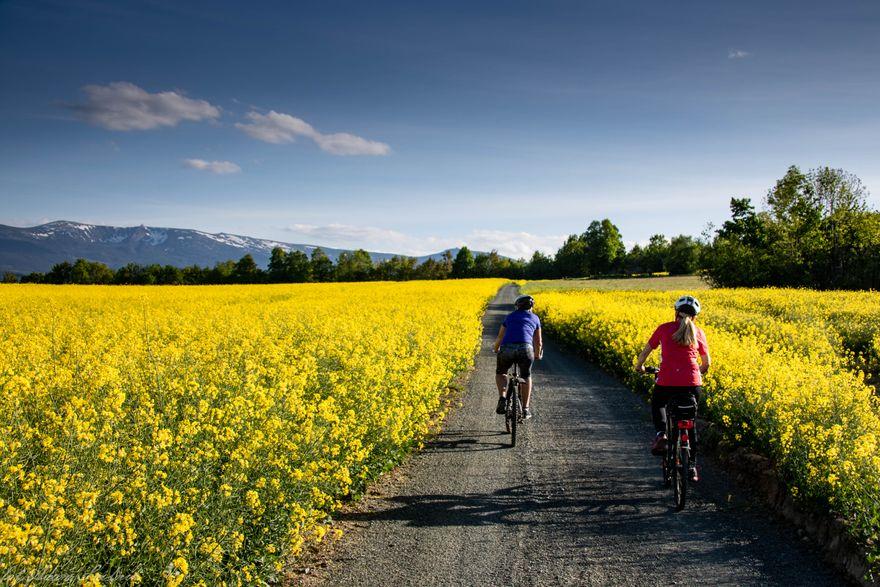 Stara Kamienica: Słoneczny Trakt dla rowerzystów