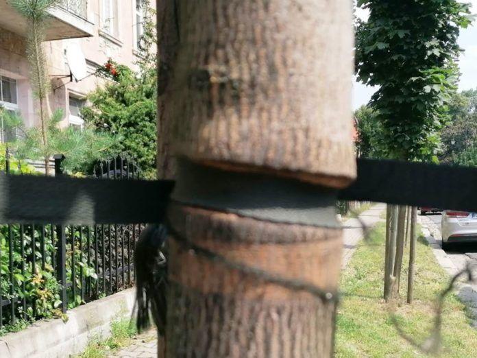 Lwówek Śląski: Bezmyślne palikowanie