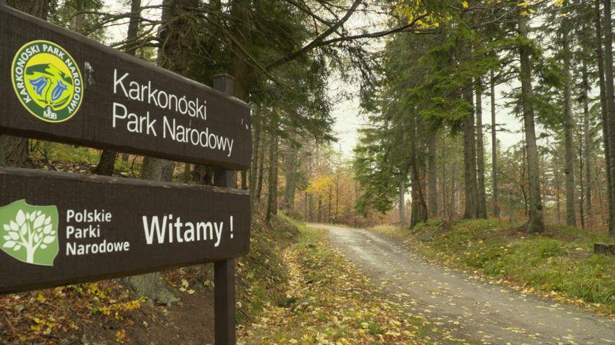 Jelenia Góra: Lasy oazą bezpieczeństwa