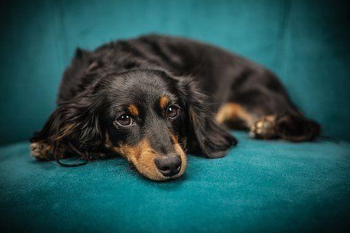 Karpacz: Dobrze się zastanów zanim oddasz psa
