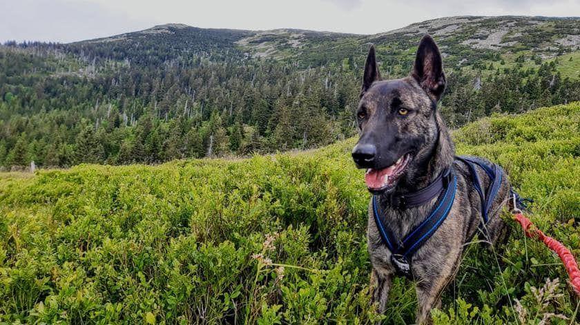 Powiat: Gdzie jest psi ratownik?