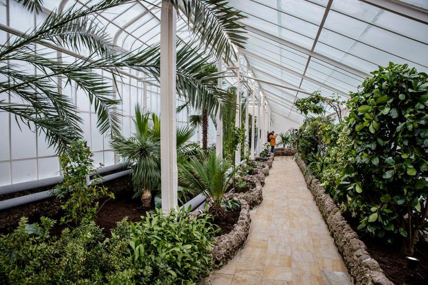 Wałbrzych: Palmiarnia uratowana