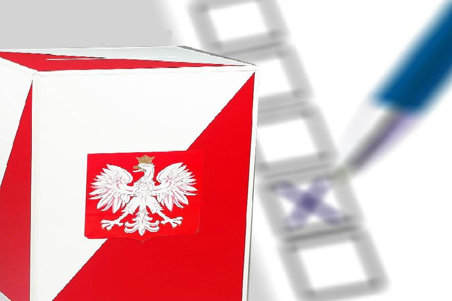Gryfów Śląski: Oficjalni kandydaci