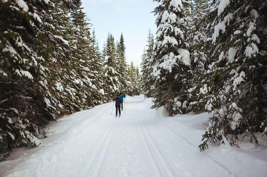 Świeradów Zdrój: Na narty szlakiem cietrzewia