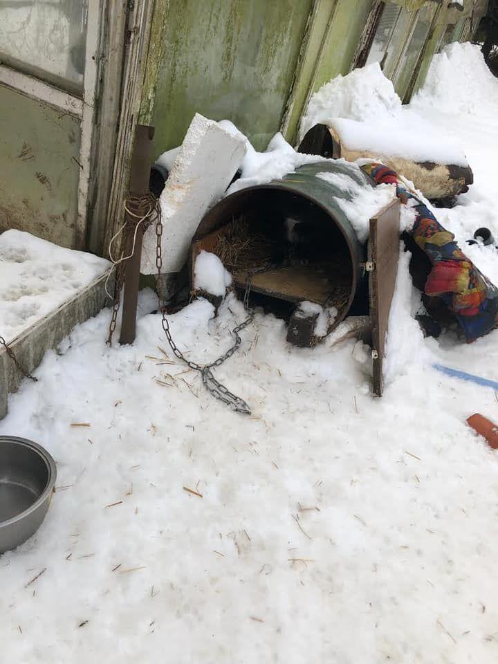 Jelenia Góra: Sąd uniewinnia obrońcę zwierząt