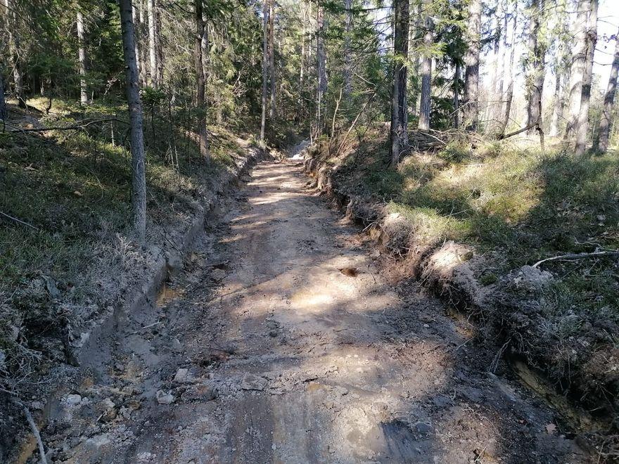Jelenia Góra: Leśnicy kończą porządki