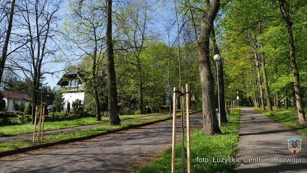 Lubań: Drzewa za drzewa