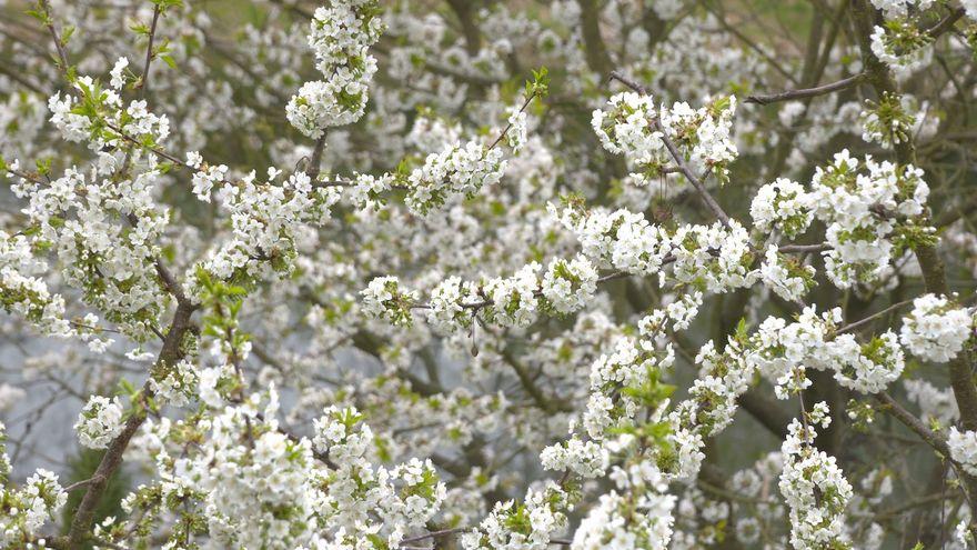 Jelenia Góra: Zima trudna dla pszczelarzy