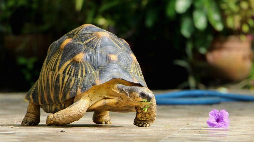 Kraj: Dzień Żółwia