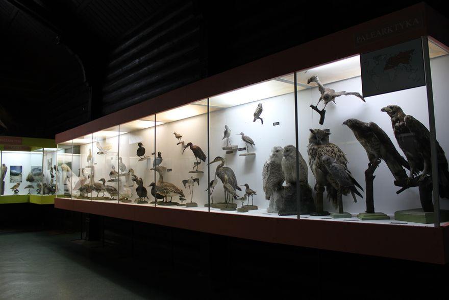 Jelenia Góra: Muzealnictwo przyrodnicze w Polsce dawniej i dziś