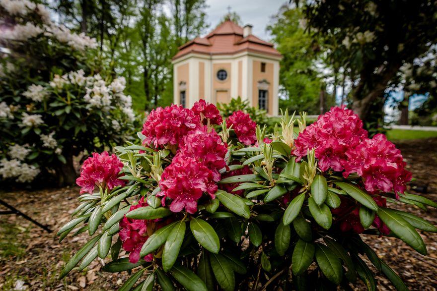Wałbrzych: Zamek Książ w kwiatach