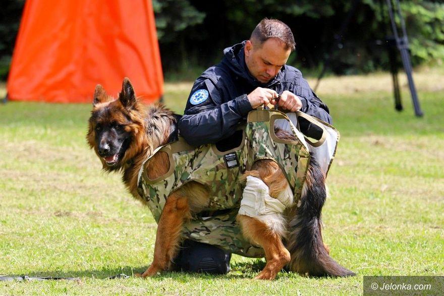 Jelenia Góra: Szkolenie psów w służbach mundurowych pod okiem studentów