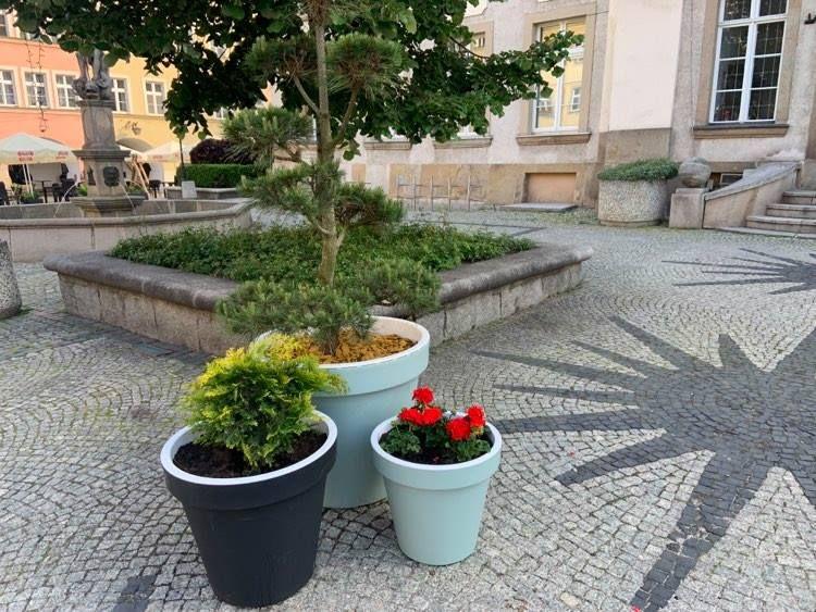 Jelenia Góra: Bonsaje i pelargonie…