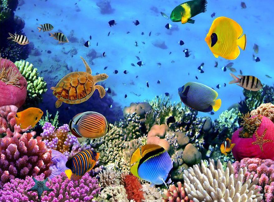 Kraj: Dzień Trójkąta Koralowego