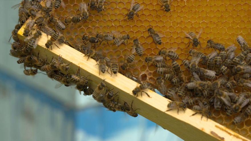 Jelenia Góra: Warsztaty pszczelarskie wakacyjnie dla dzieci