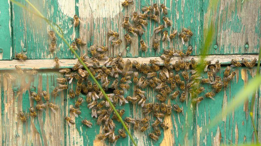 Jelenia Góra: Trudny sezon pszczelarzy