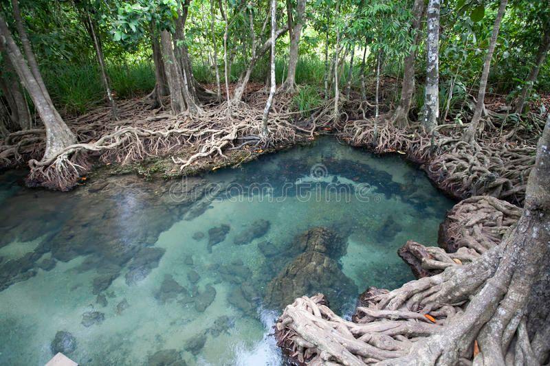 Kraj: Dzień Lasów Namorzynowych