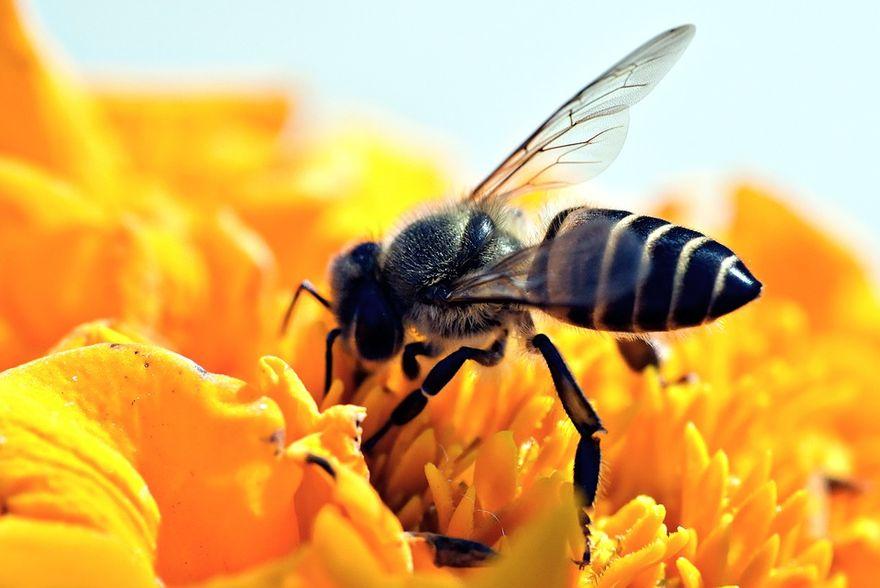 Europa: Dzisiaj Dzień Pszczół