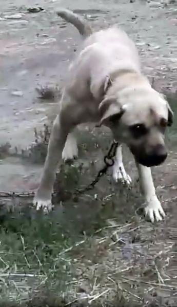 Jelenia Góra: Wraca do sądu sprawa znęcania się nad psem