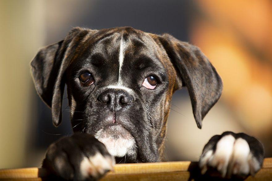 Świat: Dzisiaj Międzynarodowy Dzień Psa