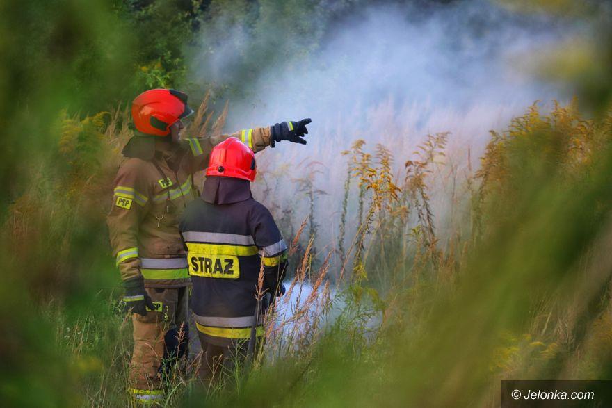 Jelenia Góra: Pożar śmieci przy Grunwaldzkiej