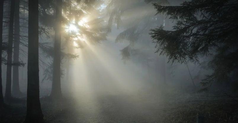 Złotoryja: Miej telefon w lesie