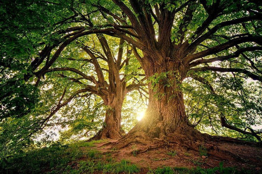 Kraj: Dzień Drzewa
