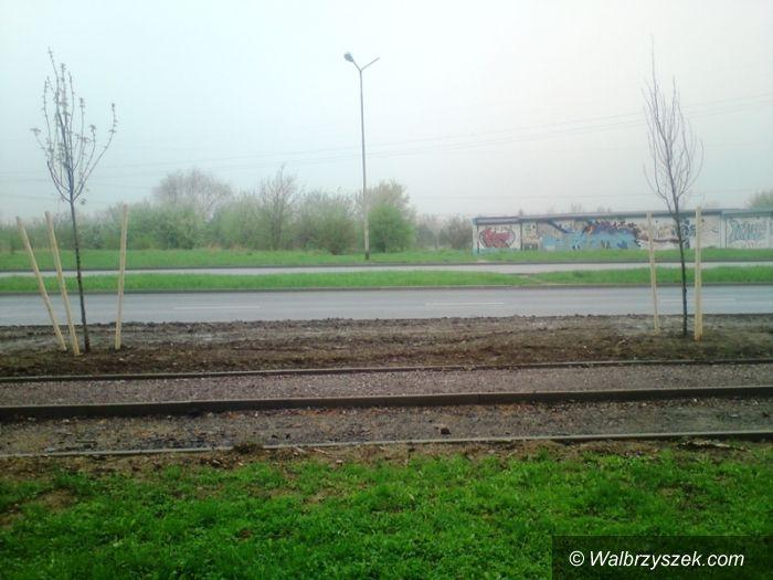 Wa łbrzych: Czytelnik ma zastrzeżenia do nasadzania drzew w dzielnicy Podzamcze