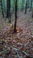 Wałbrzych: Pies przywiązany do drzewa
