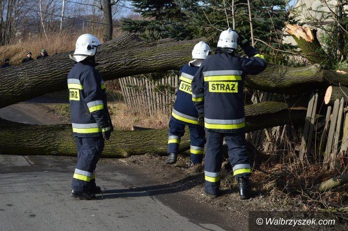 Stare Bogaczowice: Powalone drzewa w Starych Bogaczowicach