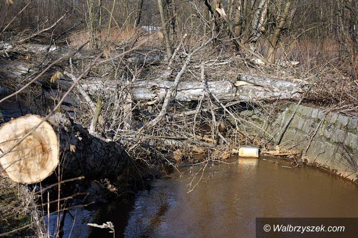 Wałbrzych: Konary drzew tworzą zator na rzeczce