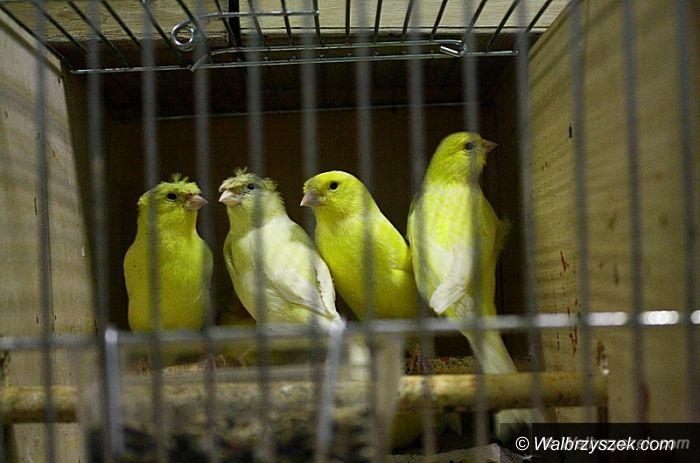 Wałbrzych: Wystawa ptaków w OSK