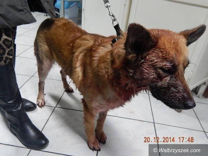 REGION, Boguszów-Gorce: Mieszkaniec Gorc skatował swojego psa