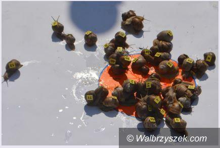 Walim: V Wyścig Ślimaków Winniczków za nami