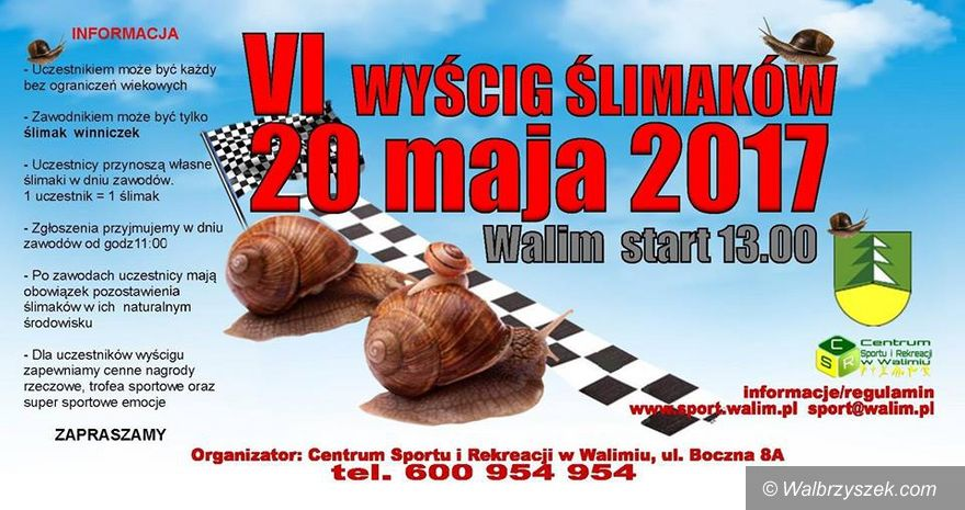 REGION, Walim: Zapraszamy na VI Wyścig Ślimaków Winniczków